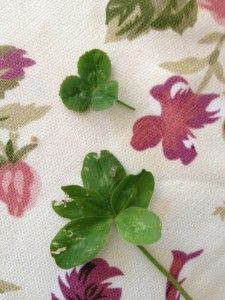 A 5 Leafed Clover