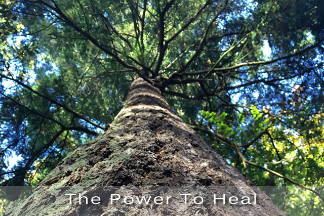 The-Power-To-Heal_2a